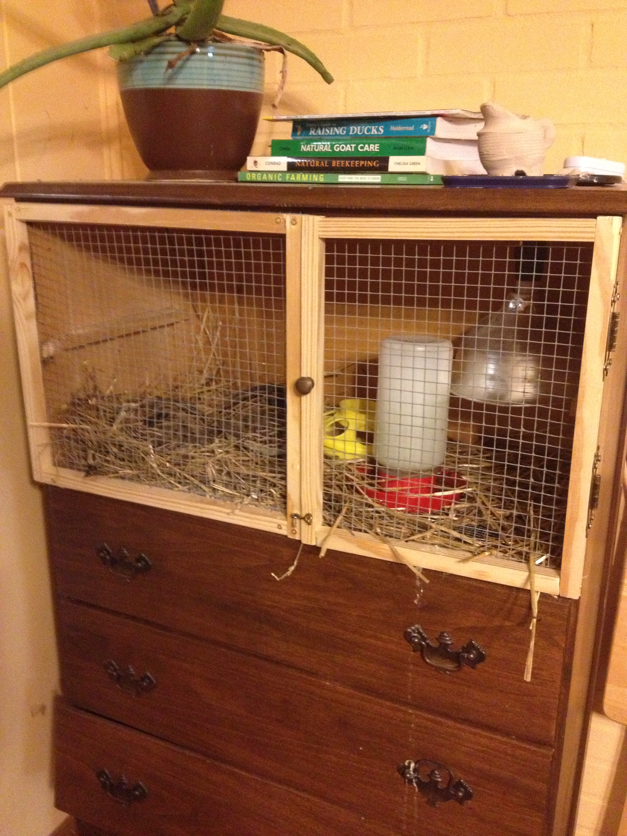 How To Build A Chest Of Drawers Chicken Brooder